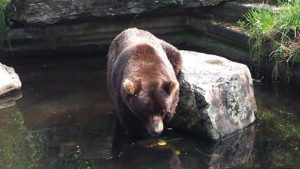 Zoo_Bär-300x169