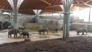 Zoo_Elefanten-300x169